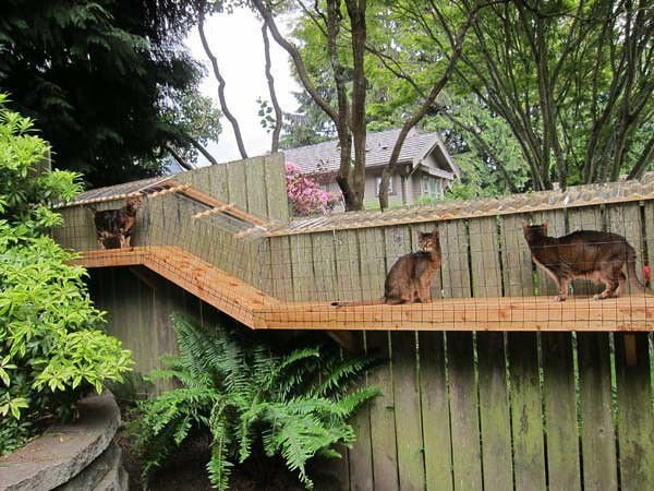 All the cool cats have a 'catio'