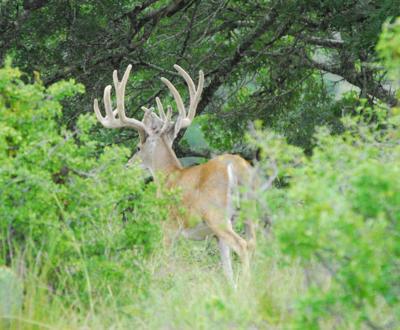 Deer survey