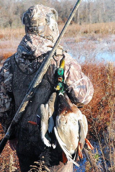 Second duck season setting up to be a good one