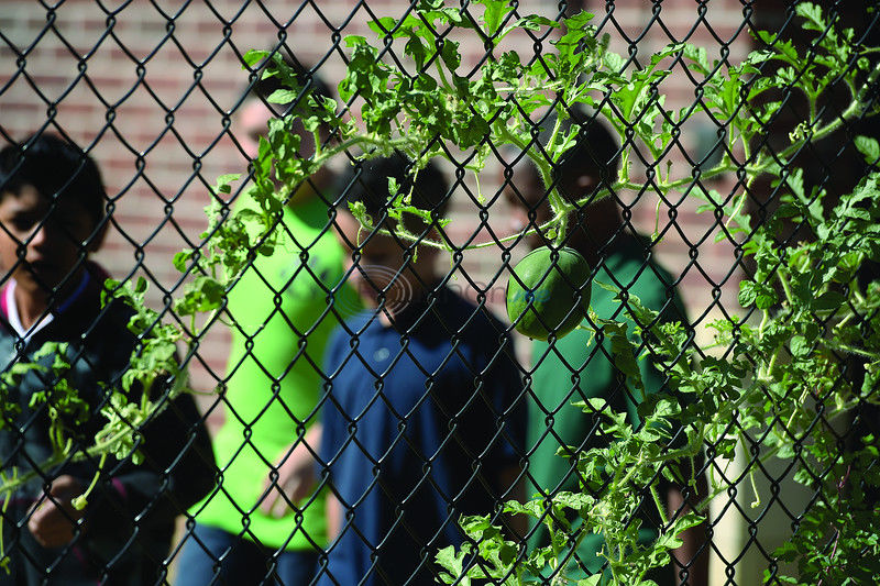 After-school Club Learns About Gardening
