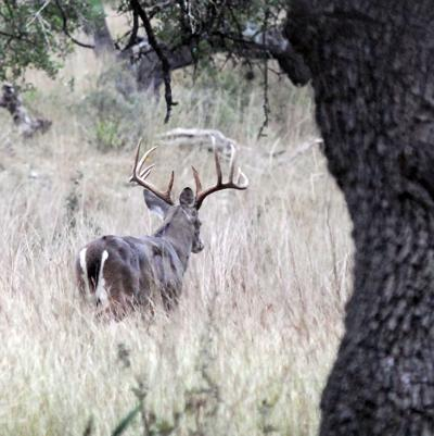 Bow season buck