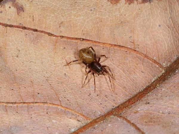 Trap-jaw spiders: Super fast, super strong bites