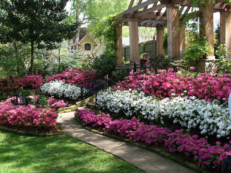 East texas has the conditions for azaleas to thrive arts for Garden design fest 2014