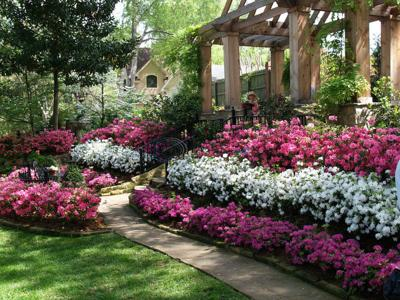 East Texas has the conditions for azaleas to thrive