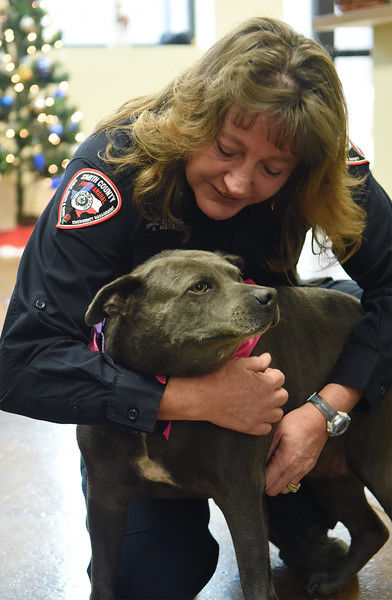 Larger county animal shelter opens downtown
