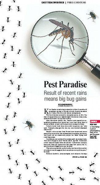 Pest Paradise: Result of recent rains means big bug gains