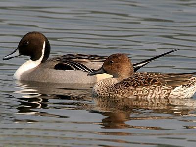 Wetlands near Corsicana attracting birds, other visitors