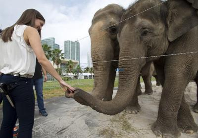 Ringling Bros. and Barnum & Bailey Circus elephants all now set to retire in May