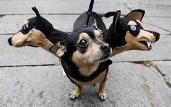 VIDEO & Photos: Dogs in Costume - Halloween Dog Parade, NY