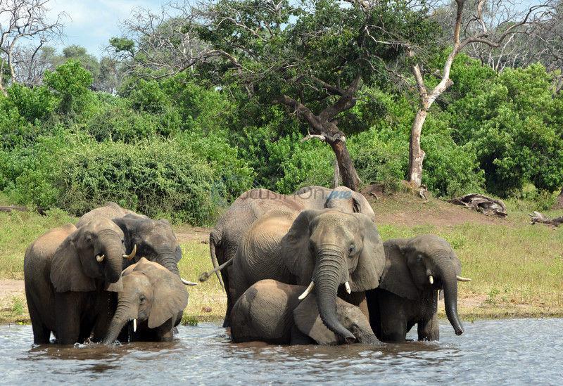 Delta's got game: Botswana full of animal thrills