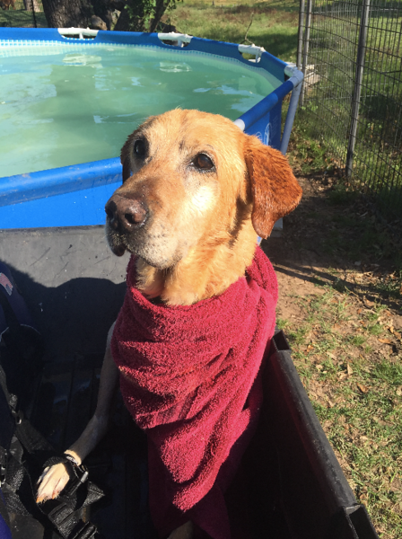 Rex, a dog injured in the Canton tornado, is recovering well and likes to swim