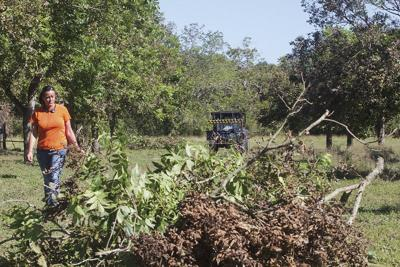 South Texas pecan crops damaged by Hurricane Harvey