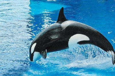 PETA buys shares of SeaWorld stock