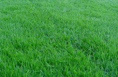 Practices to consider for healthy lawn maintenance