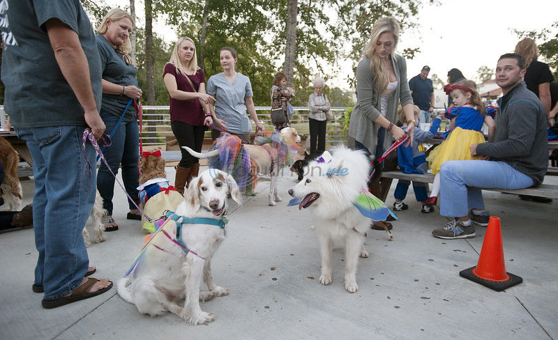 One application filed so far to allow pets on restaurant patios