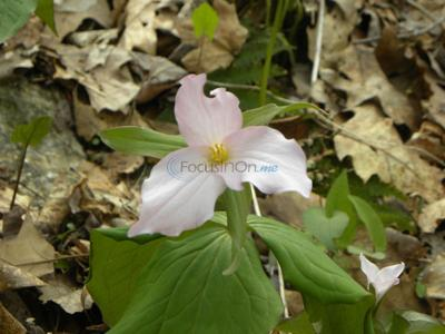 Spring wiildflowers make appearance in late winter