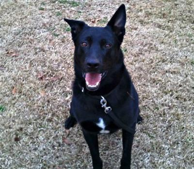 Miss. K-9 dog fired from one job, may get another