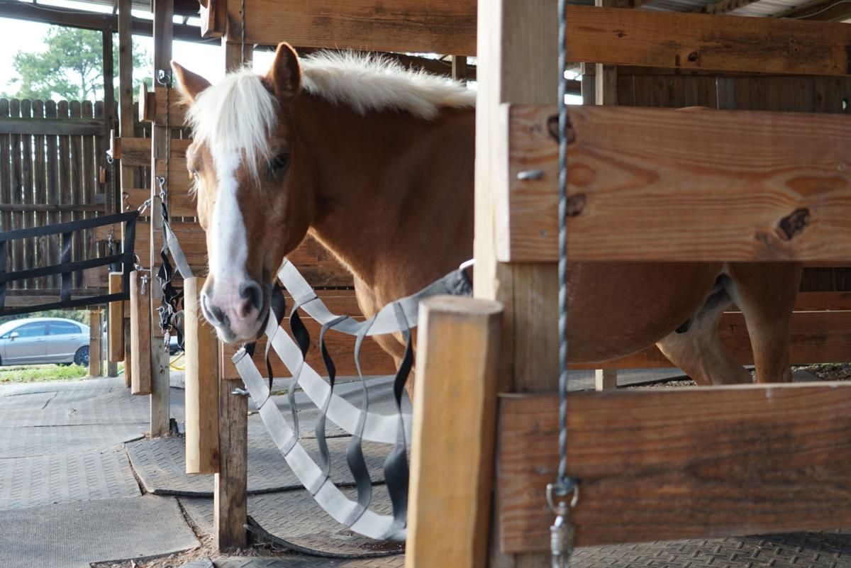 11072019_local_equine_therapy_3.JPG