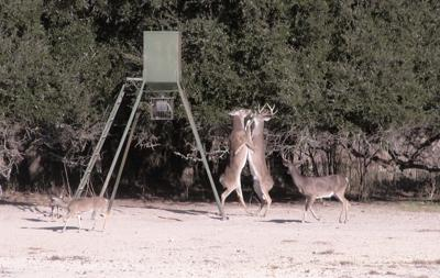 CWD discovery in free-range deer brings mandatory check stations to