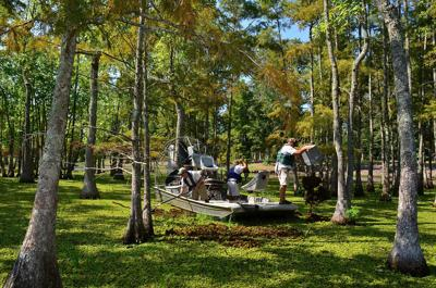 CADDO LAKE, INVASIVE SPECIES, GIANT SALVINIA WEEVIL REARING FACILITY, GIANT SALVINIA,