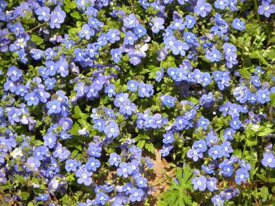 Georgia Blue welcomes spring flowers