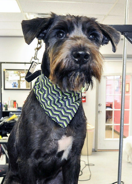 Snobby Dog Spaw gives shelter pups makeovers to help them get adopted