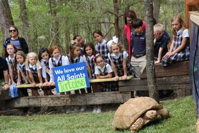 All Saints welcomes new campus tortoise
