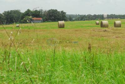 Splendor in the Grass: Coastal Bermudagrass has long history in county
