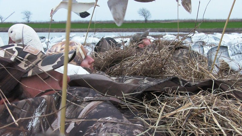 White Out: Conservation season gives hunters a late shot at migrating snow geese