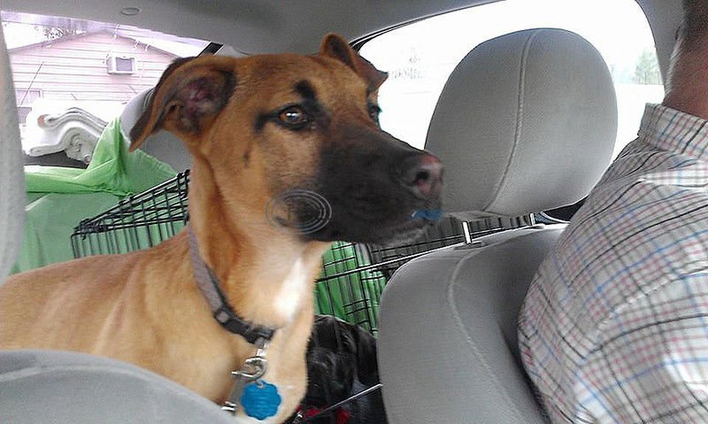 Special Delivery: Dog rescued in Tyler finds home in N.J.
