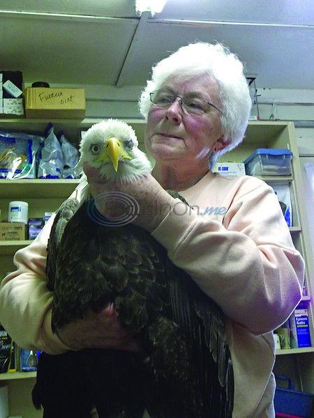 GoFundMe account set up for eagle's rehabilitation