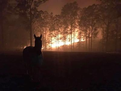 Australians Grieve, Protest As Destructive Wildfires Sweep Continent