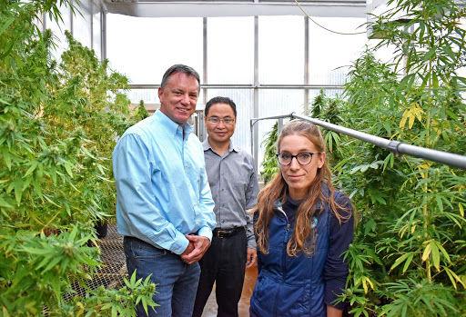 Research Team Begins Growing Hemp on Campus