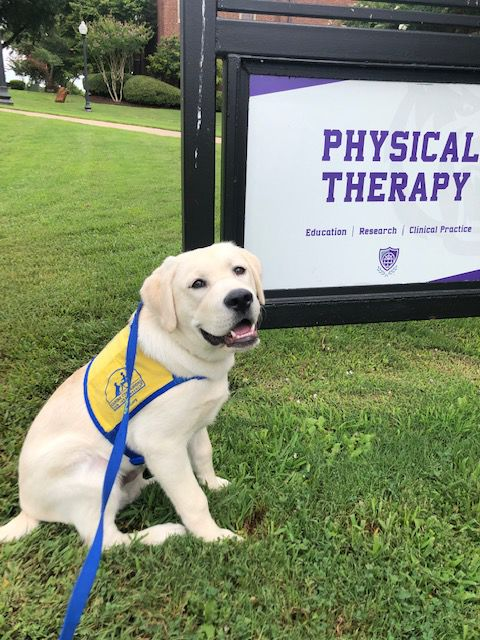 UCA Instructor Receives 2019 Arkansas Physical Therapy Association Distinguished Service Award