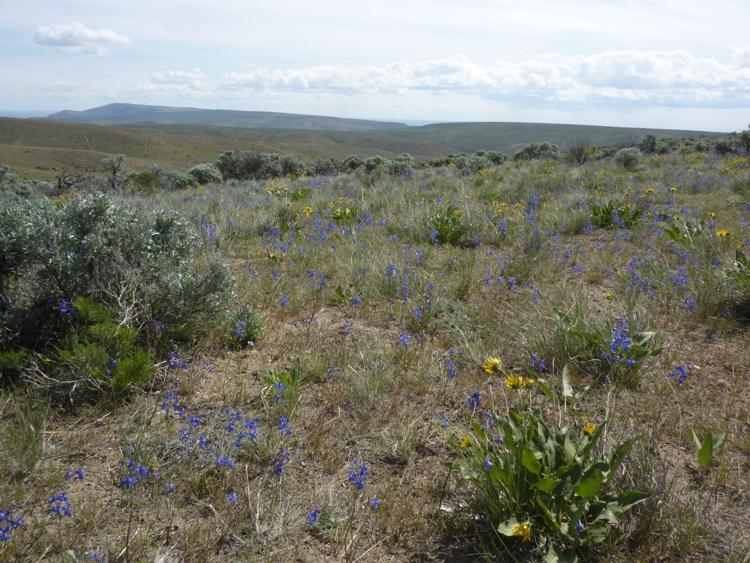 Wildflower view from top of Saddle Mountains