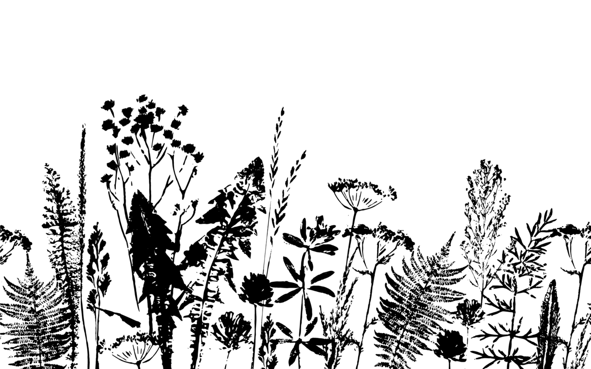 Come learn to print with nature with Katy Rizzuti!