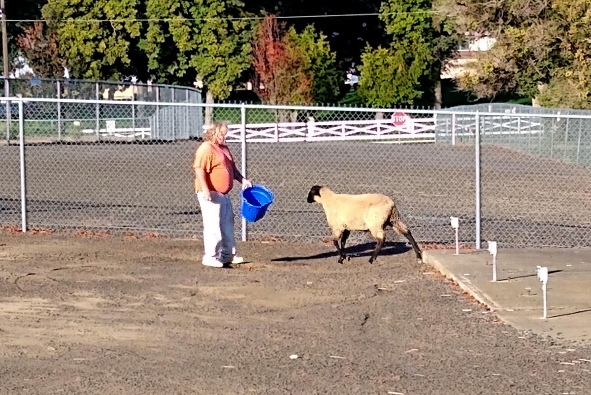 Inmate shepherds photo 4