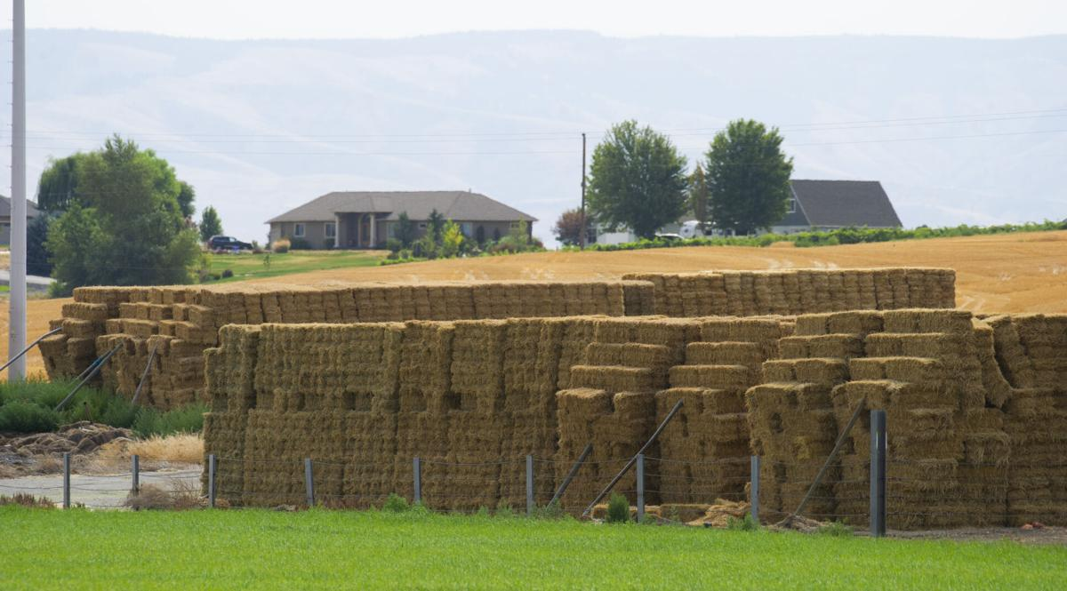 Hay and Drought