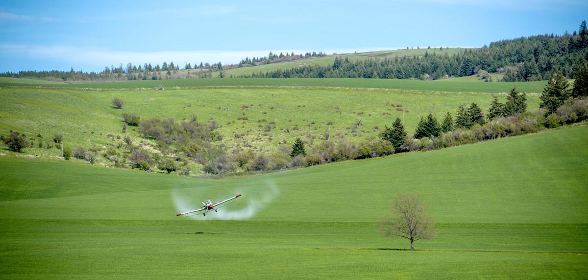 Spring Spraying