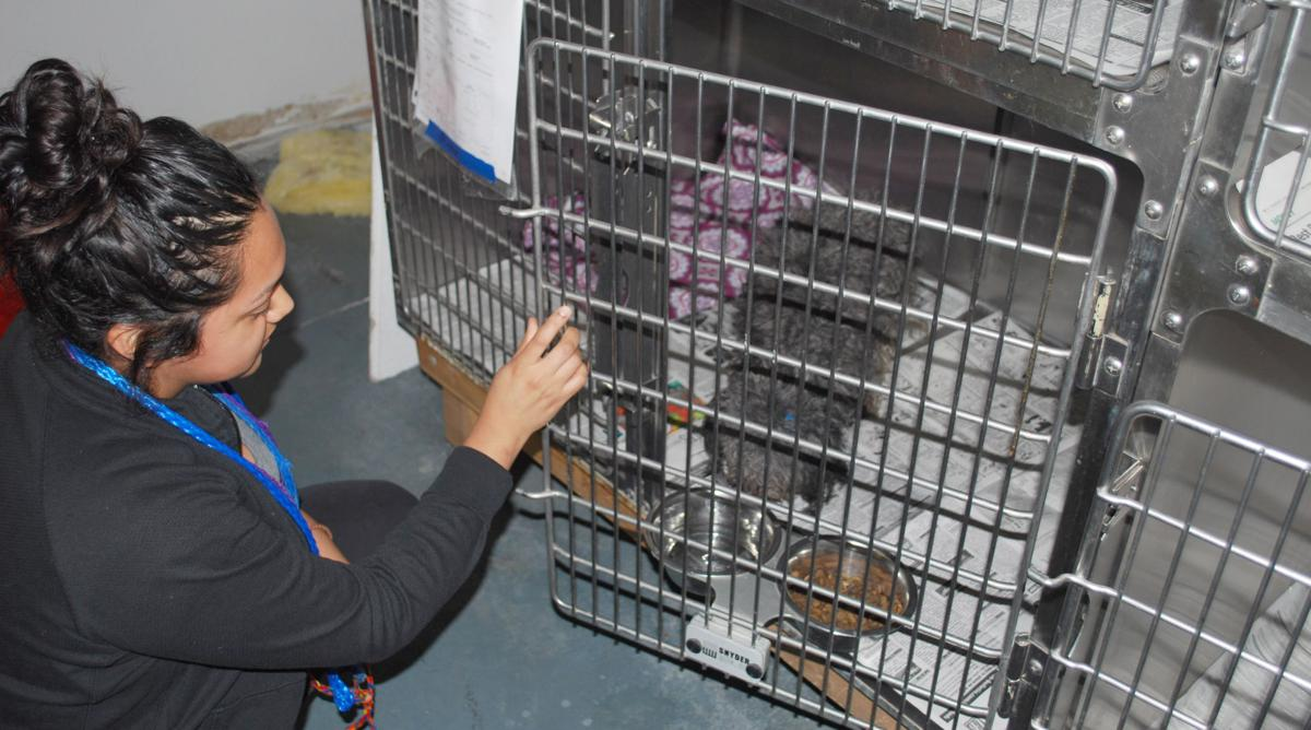 A Shower Of Cats And Dogs At Blue Mountain Humane Society