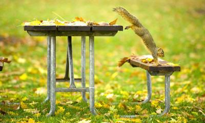 1711 FallColor-Squirrel.GL_0037pub.jpg