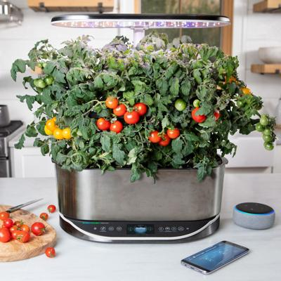 Gardening Indoor Veggies
