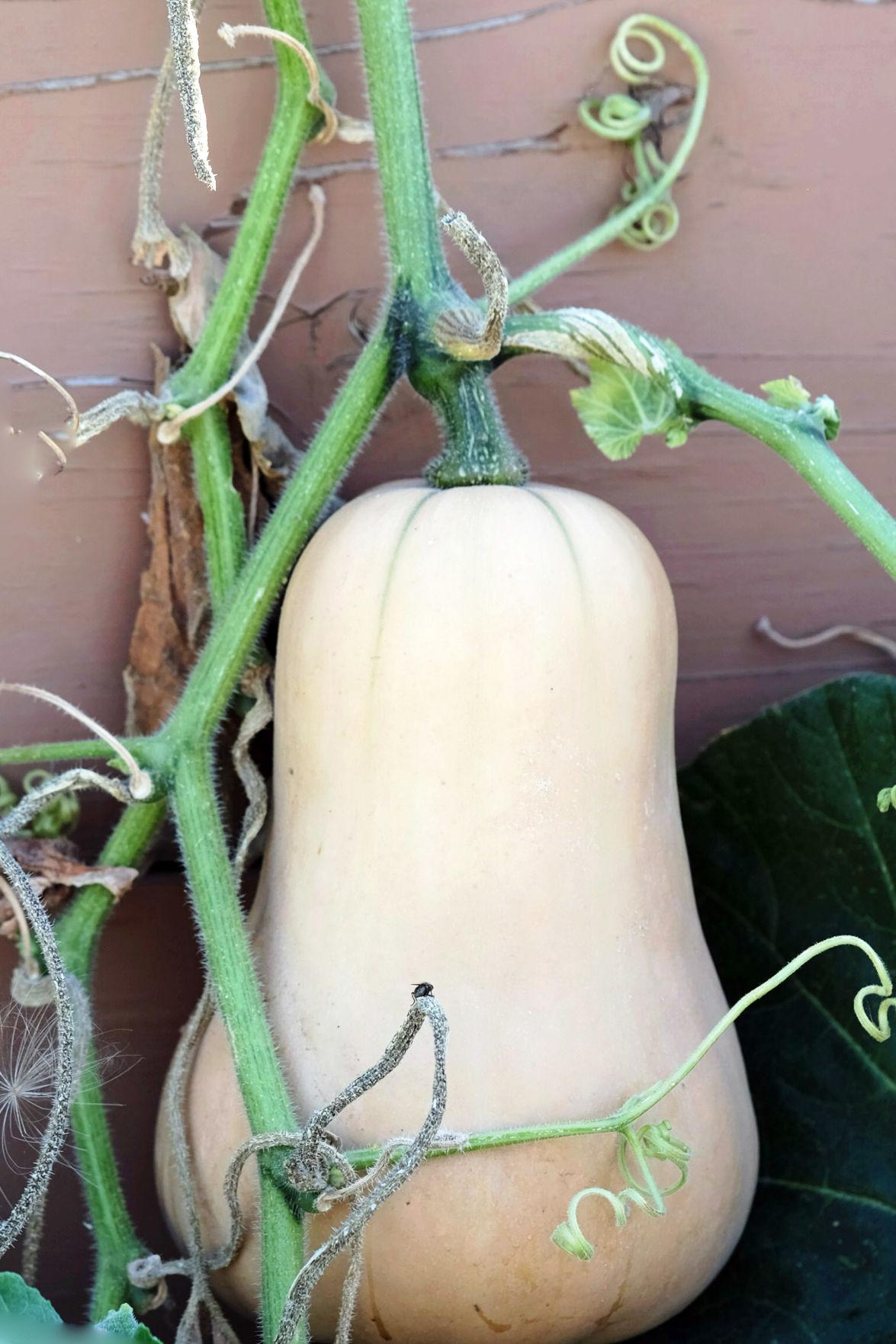 gourdian knot.jpg