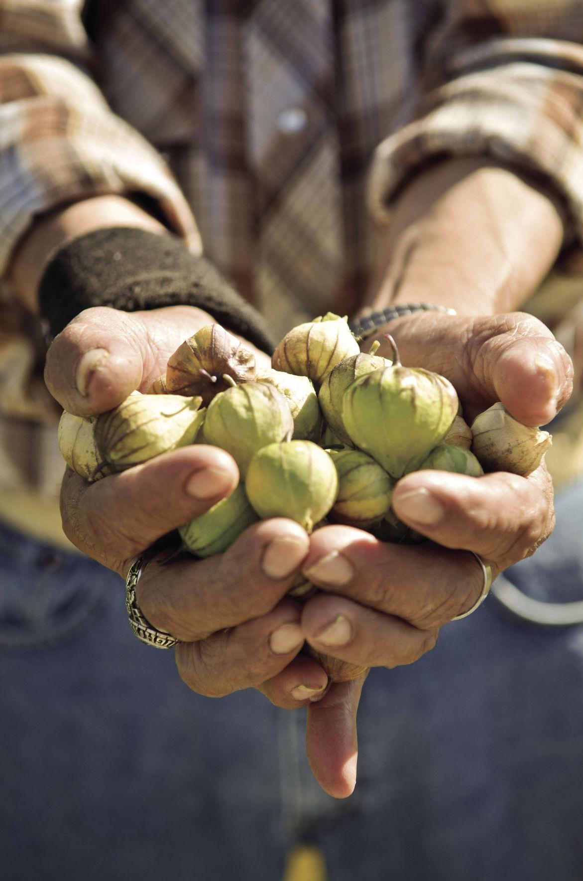 Genaro Esparza holds tomatillos