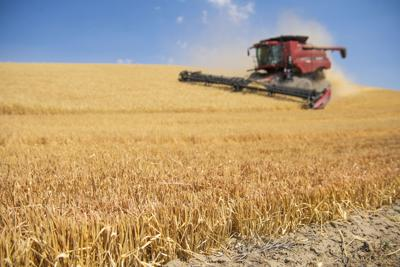 Wheat Harvest 2021