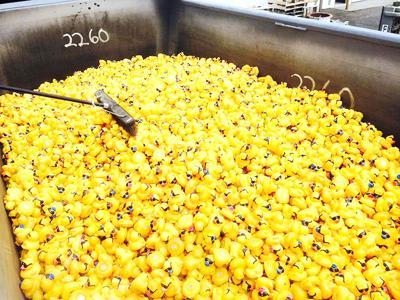 Ducky Derby tix — five bucks per duck