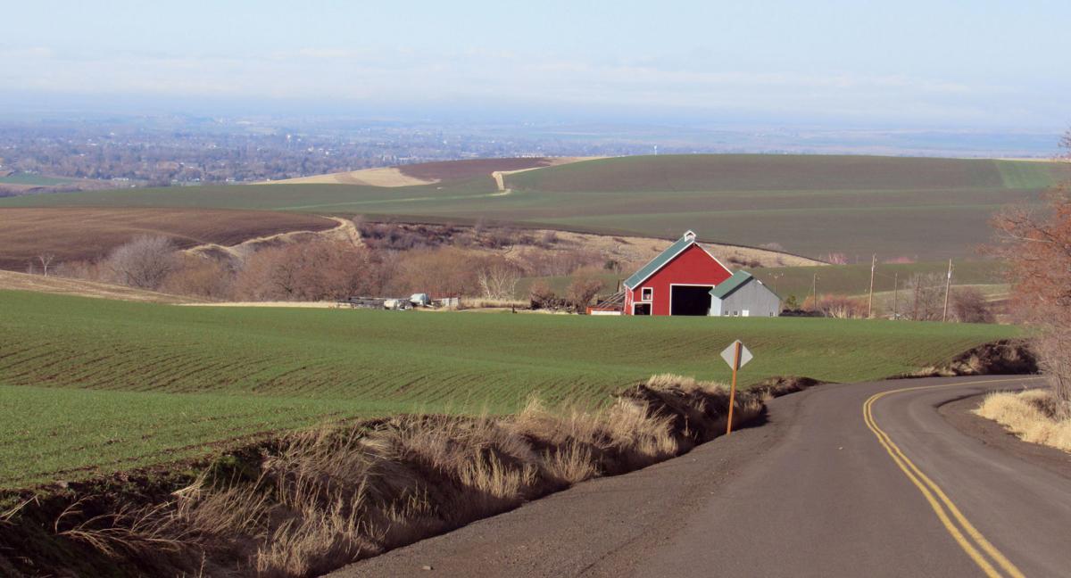 Wild country panorama