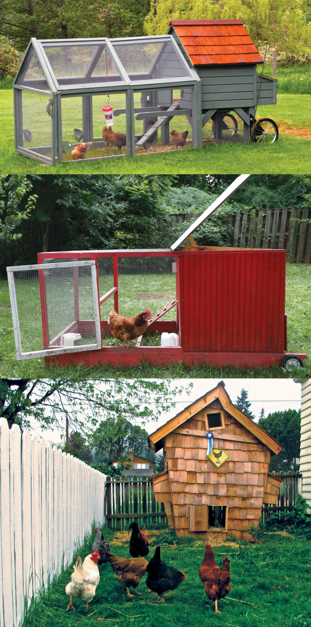 the chicken and the egg a backyard poultry primer home union