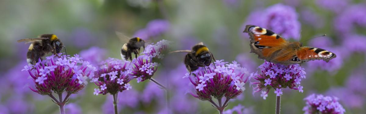 Designing Bee Friendly Gardens