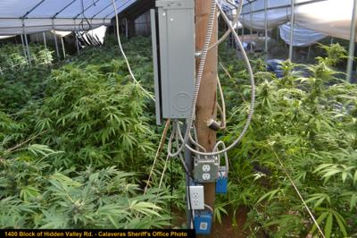 Illegal grow